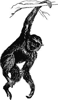 gutsy-gibbon.png
