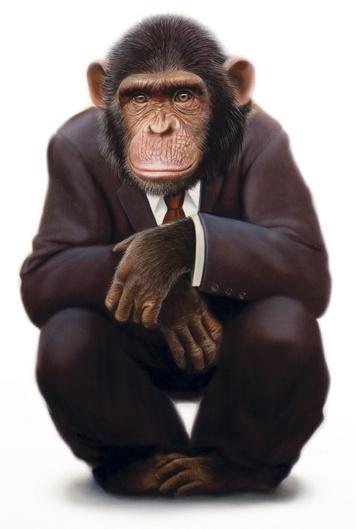 chimpanzee.jpg
